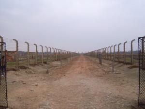 Scorcio di Birkenau