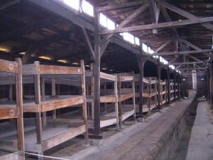 Letti nel settore maschile di Birkenau