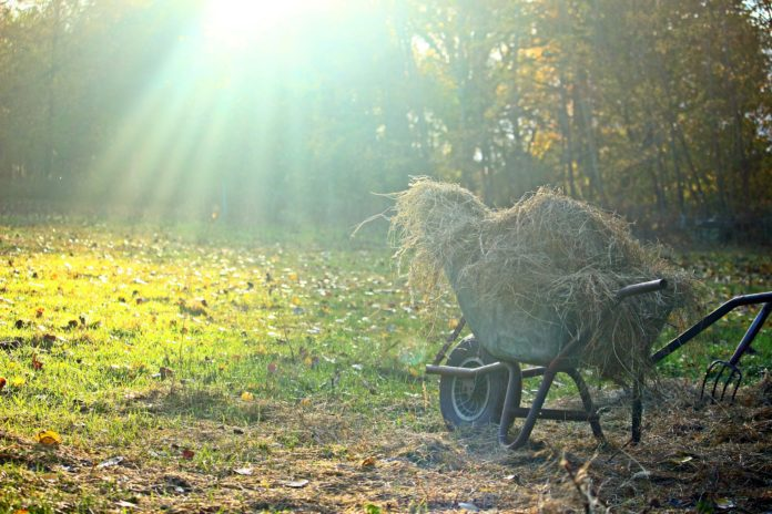 Ordinanza 112: Foto di una carriola durante pulizia erbacce